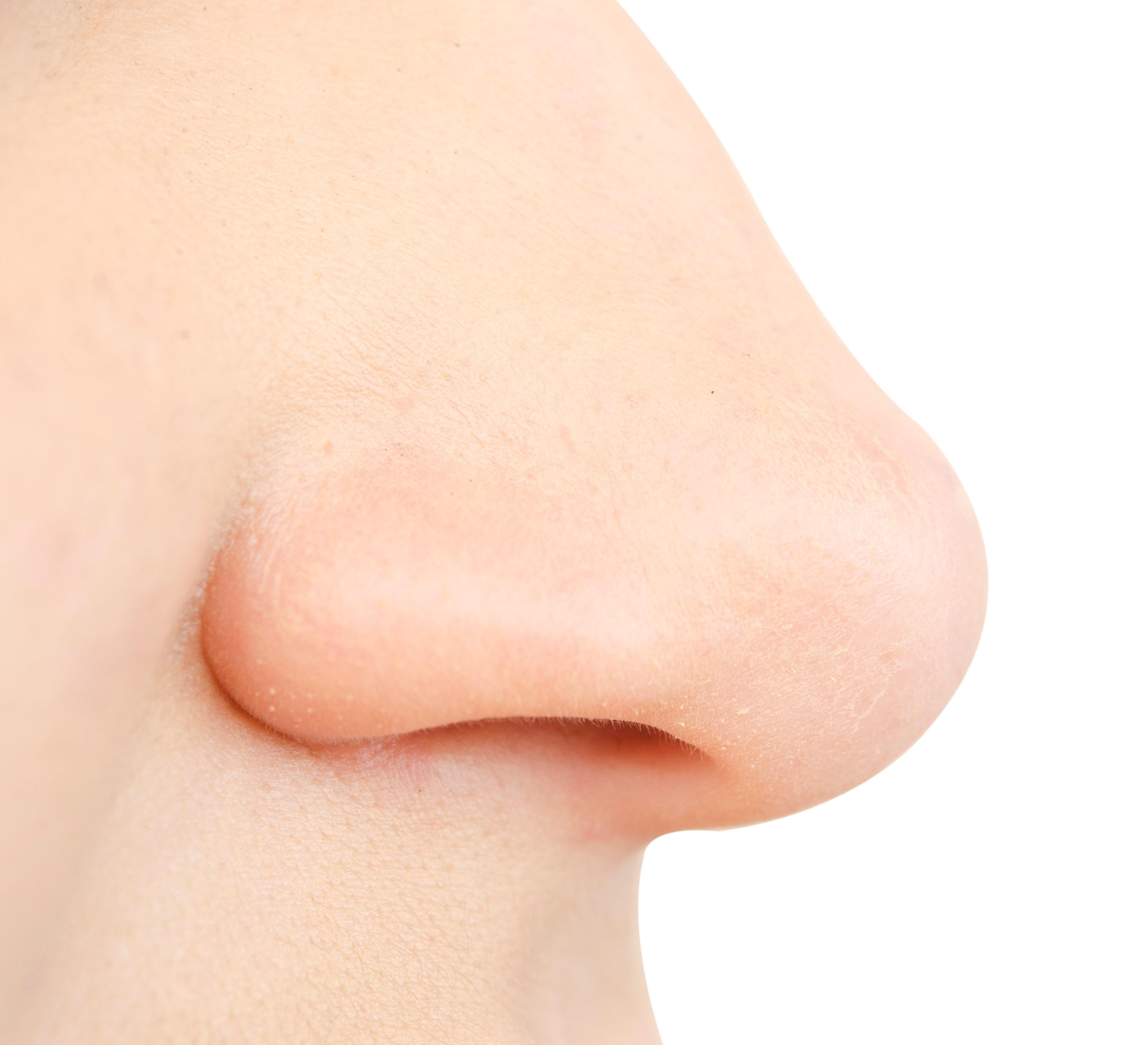 Adobe ENT- human nose